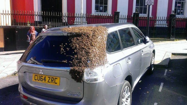 20.000 abejas persiguieron un coche