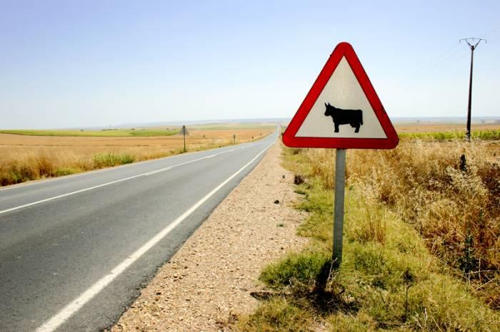 Un motorista pierde la vida al colisionar con una Vaca